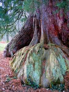 Arbre dans la forêt alsaciennne