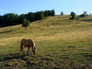 Les chaumes d'Alsace avec un cheval en été