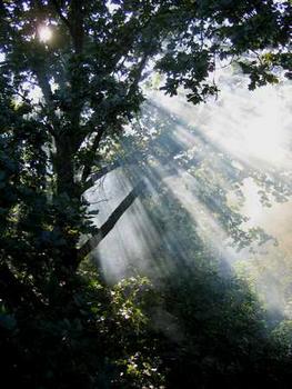 Rayons du soleil dans la forêt des Vosges