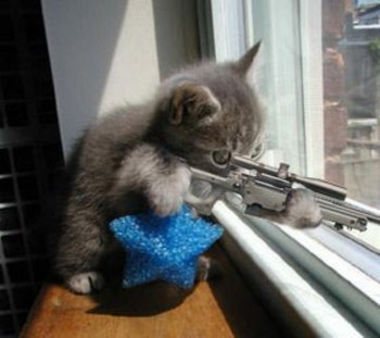 chat_fusil